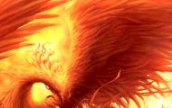 phoenixtop